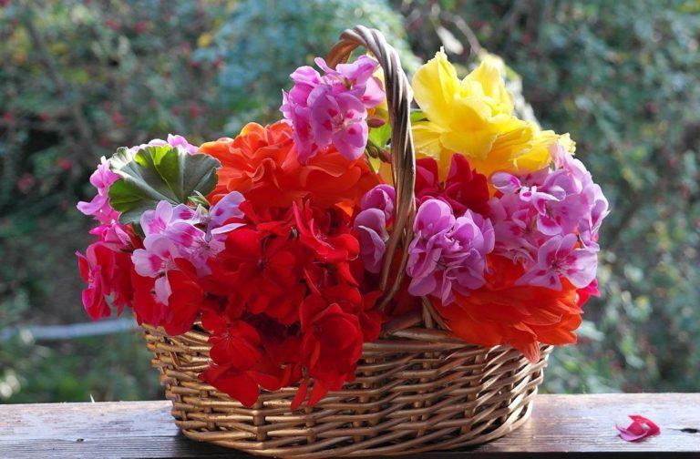 Flower boxy to świetny sposób na trwały prezent i dekorację domu czy biura